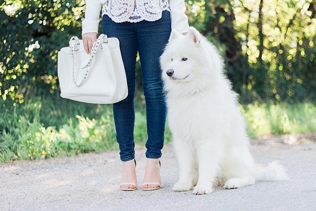 White samoyed puppy